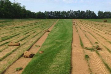 Sod Installation & Seeding